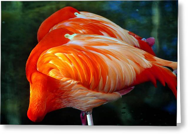 Twp Birds Greeting Cards - Eye of the Flamingos Greeting Card by David Lee Thompson