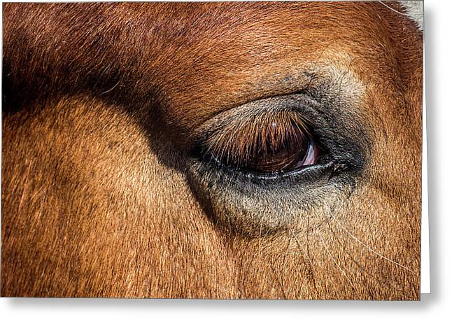 Eye Of The Horse Greeting Card by Paul Freidlund