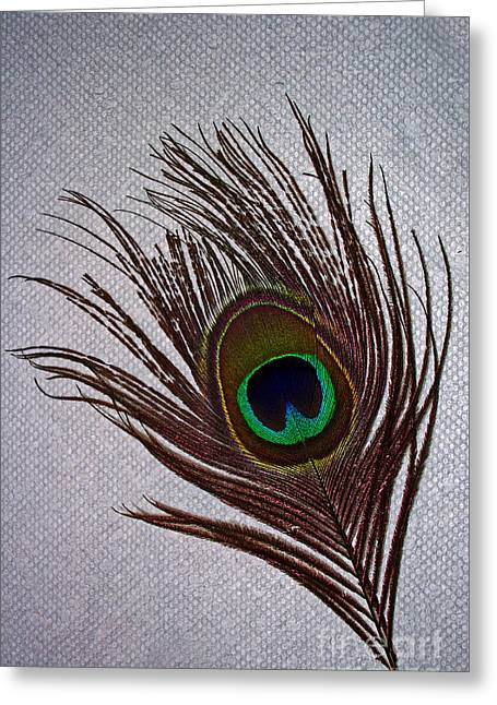 Eye Of The Peacock Greeting Card by Skip Willits