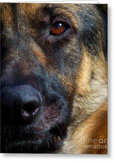 Herding Dogs Greeting Cards - Eye of the Shepherd Greeting Card by Jai Johnson