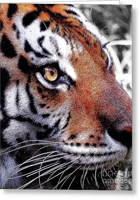 Animals Art Greeting Cards - Eye of the Tiger Greeting Card by Animals Art
