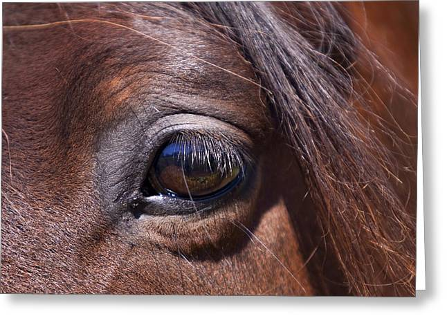 Michelle Wrighton Greeting Cards - Eye See You Greeting Card by Michelle Wrighton