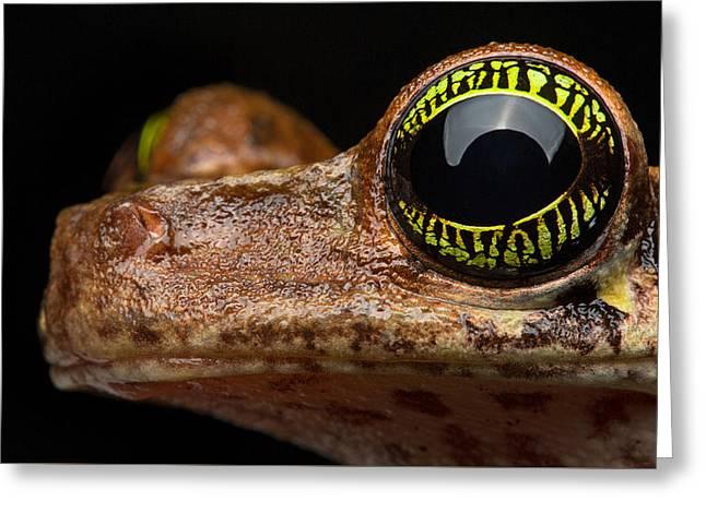 Treefrog Greeting Cards - Eye Tropical Tree Frog Greeting Card by Dirk Ercken