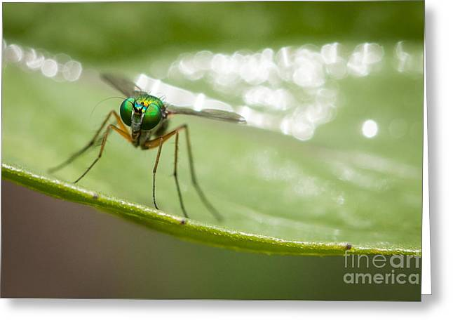 Nature Study Greeting Cards - Eyes of Green Greeting Card by Kenton Wandasan