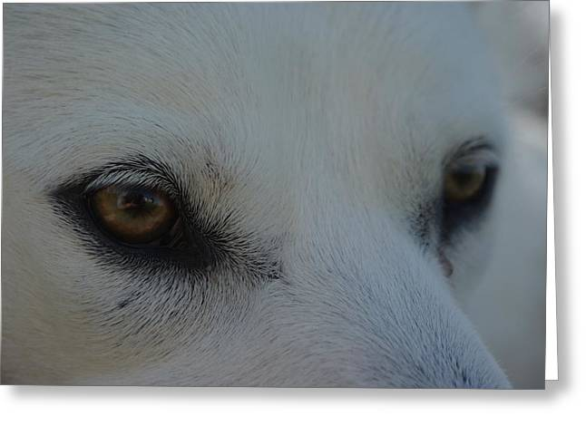Paws4critters Photography Greeting Cards - Eyes of the Wolf - In Her Eyes Greeting Card by Robyn Stacey