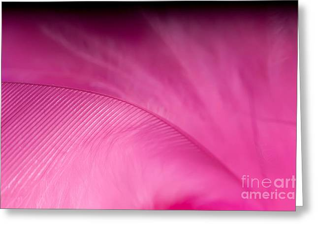 Tickled Pink Greeting Cards - F E T I S H Greeting Card by Charles Dobbs