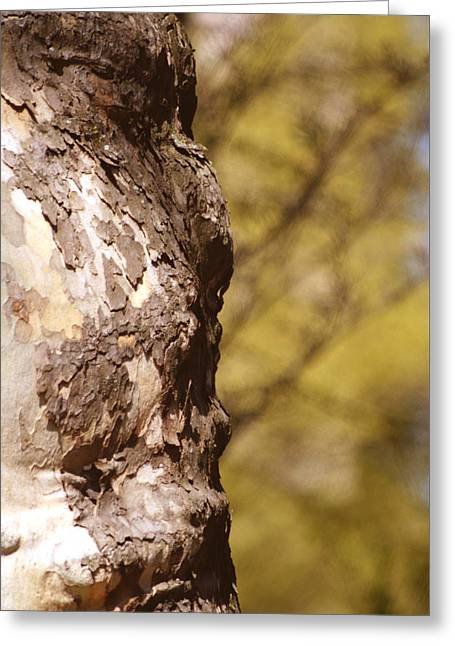 Face In The Tree Greeting Card by John Turner