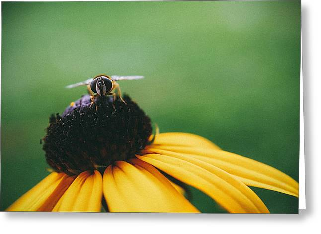 Yellow Sunflower Greeting Cards - Face of a Bee Greeting Card by Tracy  Jade