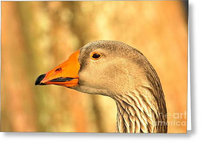 Face Of A Toulouse Goose Greeting Card by Adam Jewell