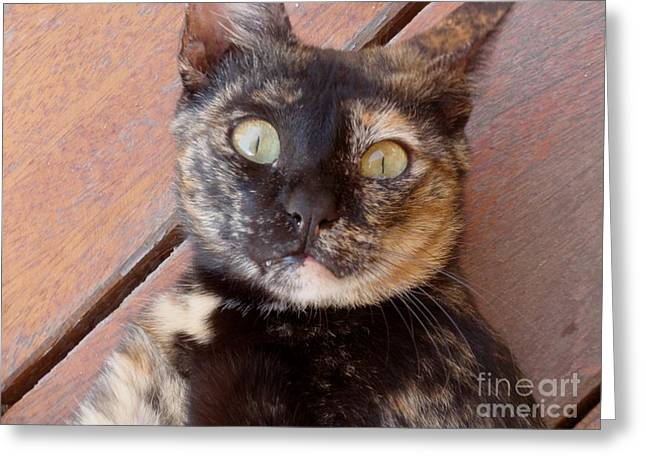 Eyes Wide Open Greeting Cards - Face Of Surprise Greeting Card by Valia Bradshaw