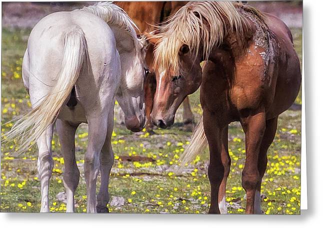 Face Off Greeting Card by Belinda Greb