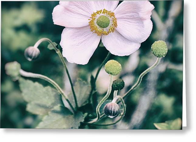 Flower Design Greeting Cards - Face Greeting Card by SK Pfphotography