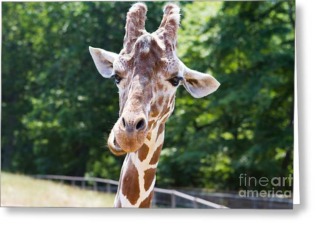 Face To Face  Greeting Card by A New Focus Photography