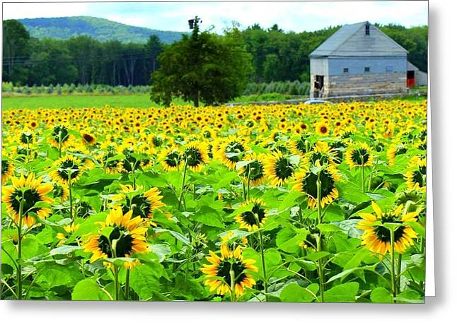Buttonwood Farm Greeting Cards - Face To Face Greeting Card by Ursula Coccomo