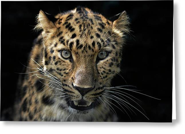 Face To Face With The Panther Greeting Card by Joachim G Pinkawa
