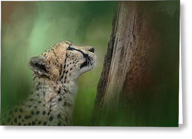 Cheetah Photographs Greeting Cards - Facing Challenges Greeting Card by Jai Johnson