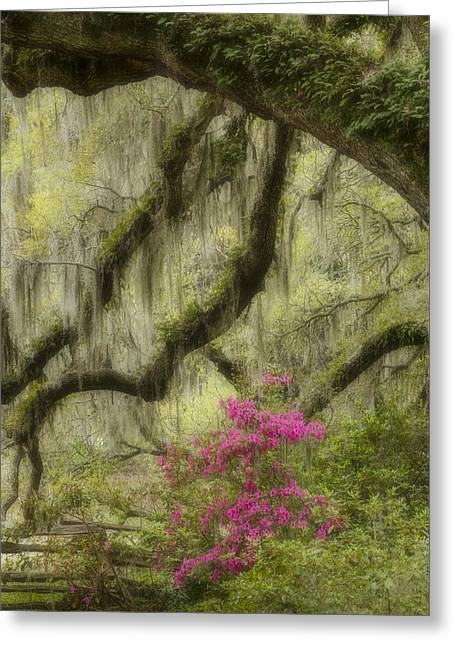Azaleas Greeting Cards - Faeries Grove Greeting Card by Mike Lang