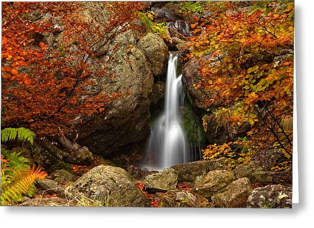 Central Balkan Greeting Cards - Fairy Fall Greeting Card by Evgeni Dinev