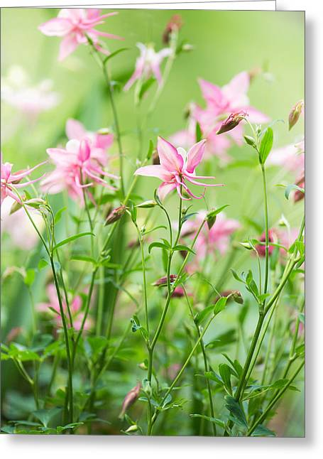Columbine Greeting Cards - Fairyland Greeting Card by Rebecca Cozart