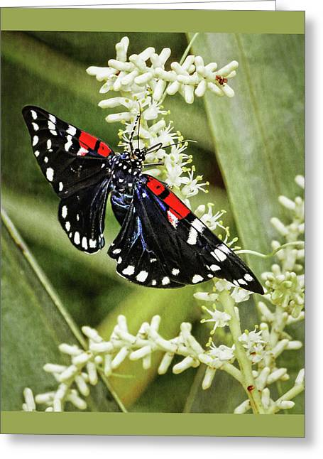 Blue And Green Greeting Cards - Faithful Beauty Greeting Card by Dawn Currie