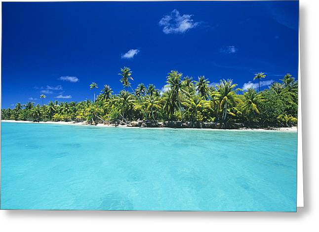 Tree Lines Greeting Cards - Fakarava Atoll Greeting Card by Alexis Rosenfeld
