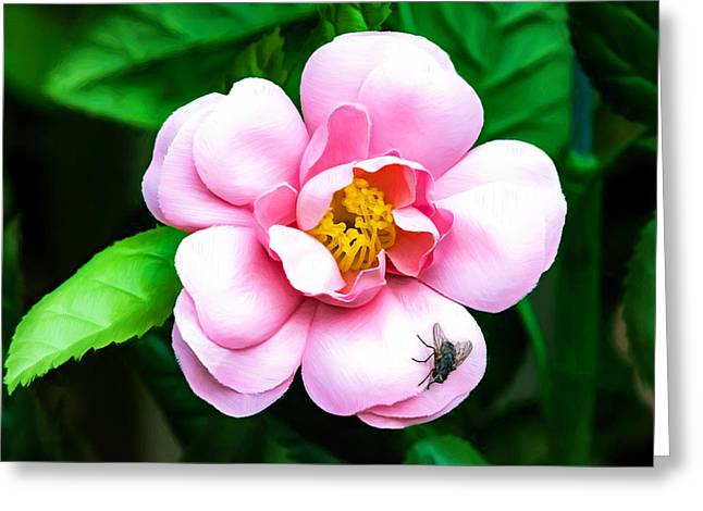 Rose Of Sharon Greeting Cards - Fakers Greeting Card by Steve Harrington
