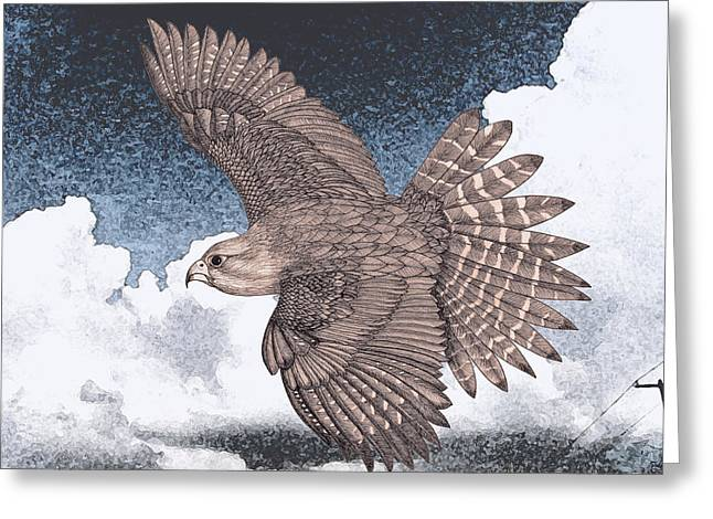Flying Animal Greeting Cards - Falcon Greeting Card by Kristie Tellier