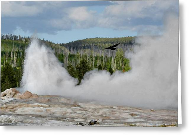 Falcon over Old Faithful - Geyser Yellowstone National Park WY USA Greeting Card by Christine Till