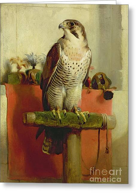 Birds Greeting Cards - Falcon Greeting Card by Sir Edwin Landseer