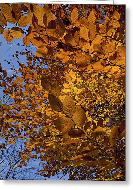 Fall 2010 51 Greeting Card by Robert Ullmann