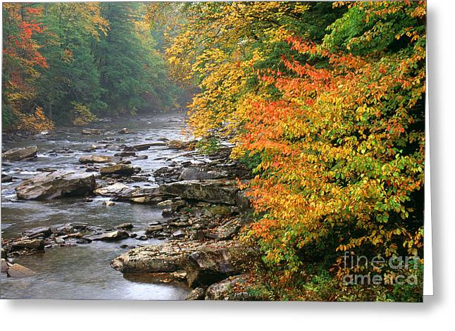 Allegheny Greeting Cards - Fall along the Cranberry River Greeting Card by Thomas R Fletcher