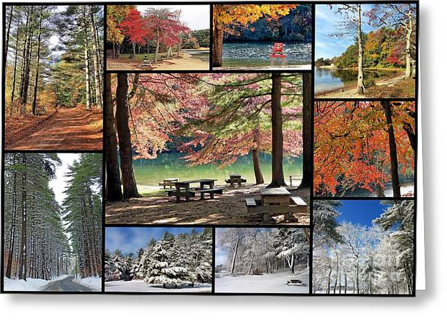 Snow Tree Prints Greeting Cards - Fall and Winter at Morton Park Greeting Card by Janice Drew