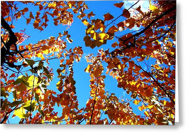Apricot Tree Greeting Cards - Fall Apricot Leaves Greeting Card by Will Borden
