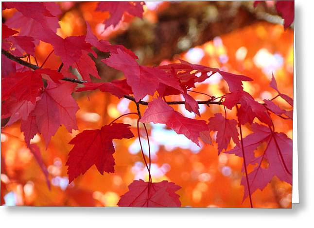 Autumn Art Greeting Cards - FALL ART Red Autumn Leaves Orange Fall Trees Baslee Troutman Greeting Card by Baslee Troutman