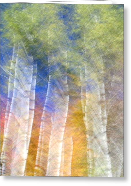 Fall Birches Greeting Card by Doug Hockman Photography