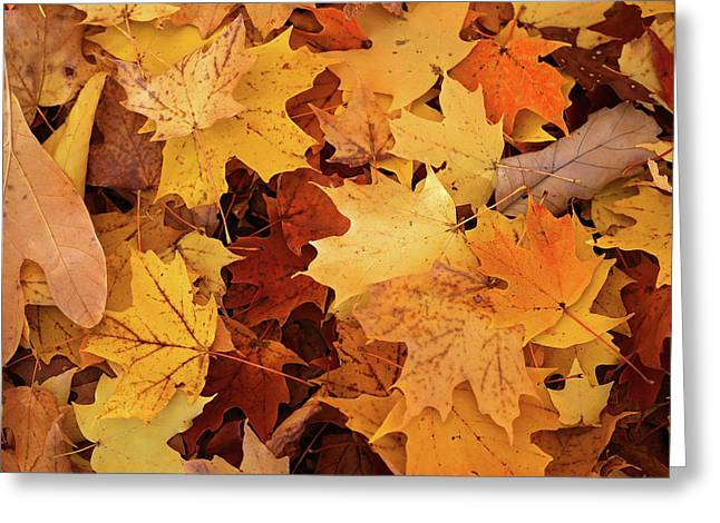 Fall Carpet 10 Greeting Card by Mary Bedy