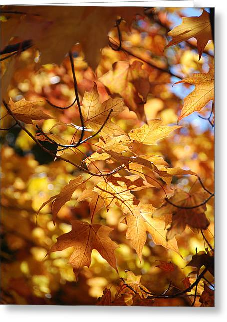 Fall Trees Greeting Cards - Fall Color 1 Greeting Card by Kathleen Zimmerman