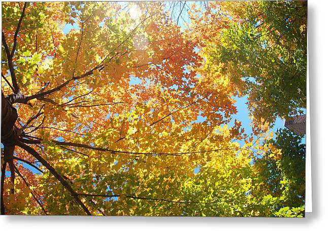 Fall Trees Greeting Cards - Fall Color 2 Greeting Card by Kathleen Zimmerman