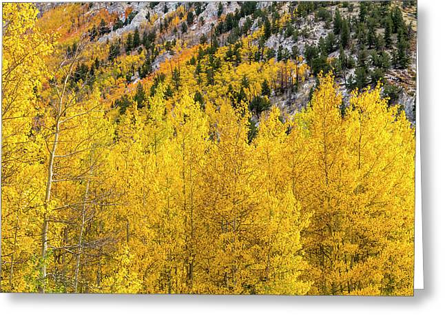 Fall Color And Snow In Colorado Greeting Card by Teri Virbickis