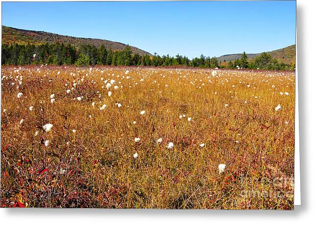 Allegheny Greeting Cards - Fall Color Cranberry Glades Greeting Card by Thomas R Fletcher