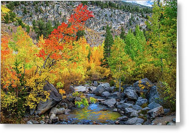 Stream Greeting Cards - Fall Colors Along Bishop Creek Greeting Card by Lynn Bauer