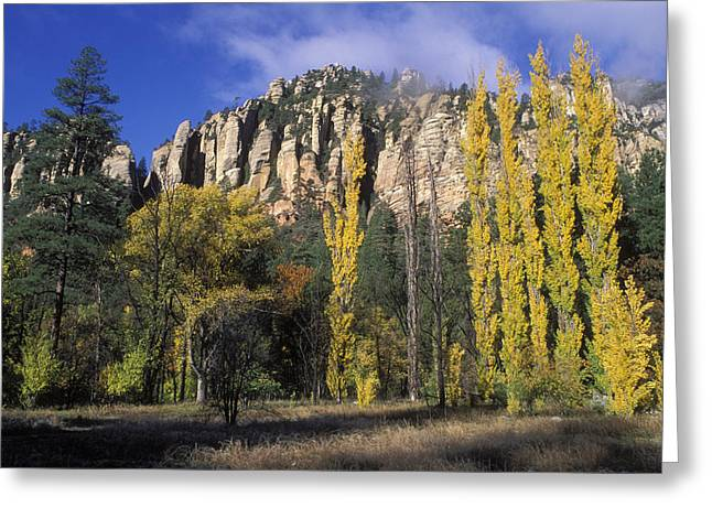 Oak Creek Greeting Cards - Fall Colors And Red Rocks Near Cave Greeting Card by Rich Reid