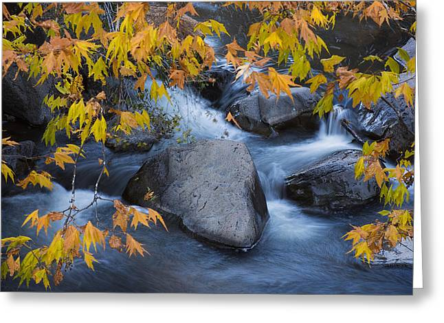 Fall Colors At Slide Rock Arizona Greeting Card by Dave Dilli