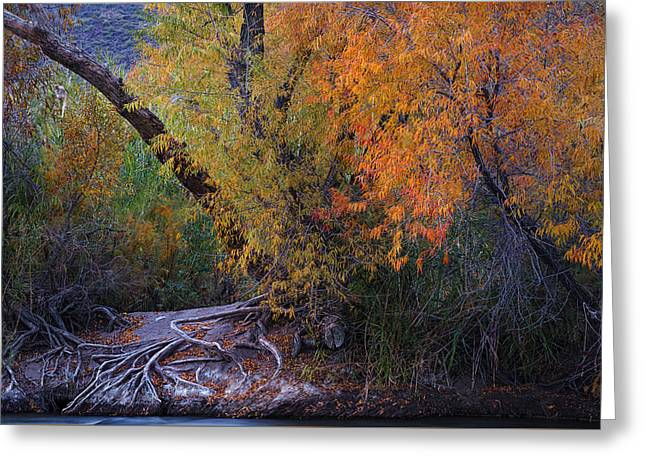 Fall Colors At The Salt River Greeting Card by Dave Dilli