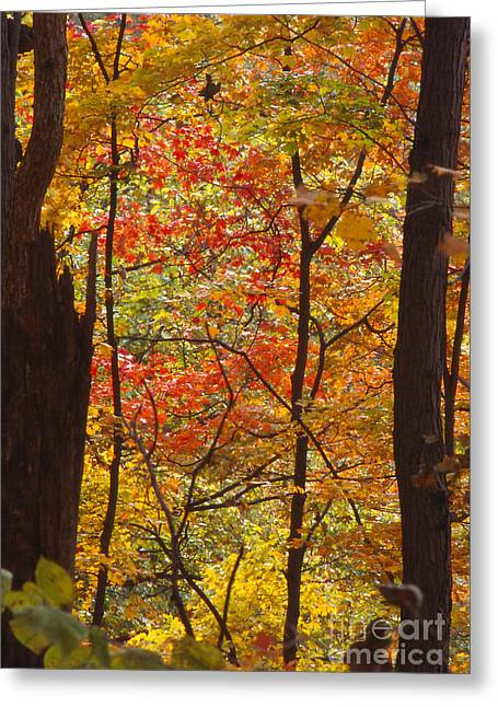 Southern Indiana Photographs Photographs Greeting Cards - Fall Colors in Indiana Greeting Card by Lowell Anderson