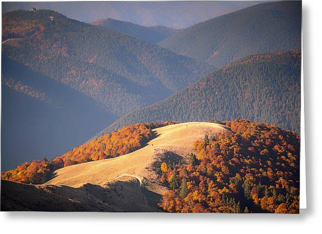 Mountaintop. Trees Greeting Cards - Fall Colors In The Mountains Of Romania Greeting Card by David Marcu