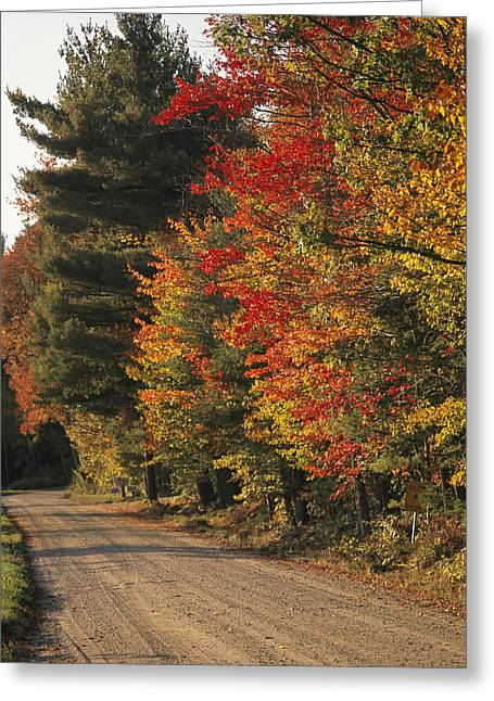 Color Change Greeting Cards - Fall Colors Line A New England Road Greeting Card by Heather Perry
