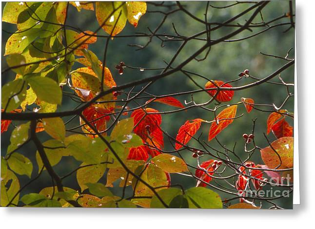 Southern Indiana Photographs Photographs Greeting Cards - Fall Colors Greeting Card by Lowell Anderson