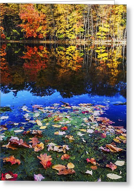 Fall Colors Near Bushkill Falls State Park Pa Usa Greeting Card by Vishwanath Bhat