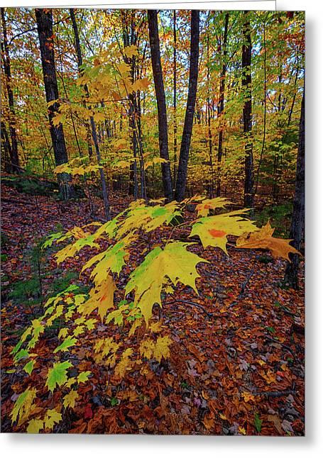 Fall Colors Greeting Card by Rick Berk